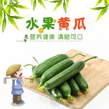 寿光黄瓜现采摘新鲜万博manbetx官网客服小黄瓜水果黄瓜即食黄瓜一件代发